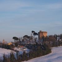 Oriolo dei mille fichi - Lorenzo Gaudenzi - Faenza (RA)
