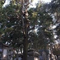 Cimitero albero - Roberto Marconi 62 - Massa Lombarda (RA)