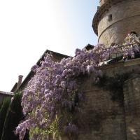 Scorcio glicine del giardino pensili - Chiara Dobro - Ravenna (RA)