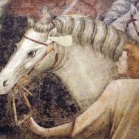 Pietro da rimini e bottega, affreschi dalla chiesa di s. chiara a ravenna, 1310-20 ca., adorazione dei magi 05 - Sailko - Ravenna (RA)
