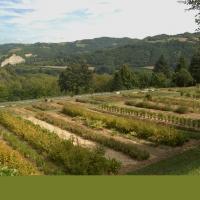 Giardino delle erbe 09 - SveMi - Casola Valsenio (RA)
