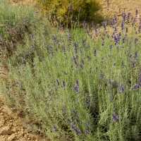 Giardino delle erbe 04 - SveMi - Casola Valsenio (RA)