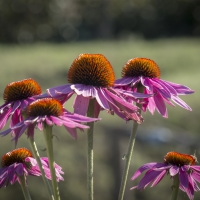 Flowers-3 - Massimo Saviotti - Casola Valsenio (RA)