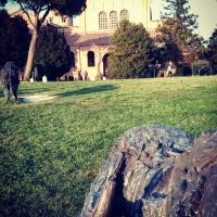 Ravenna - Basilica di Sant'Apollinare con bufali - Giacomo V. Armellino - Ravenna (RA)