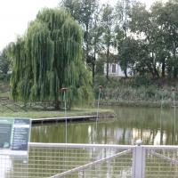 Parco Golfera - laghetto e salice - Stefano.Ronchi.it - Lugo (RA)