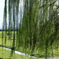 Parco intitolato al lughese Andrea Golfera - Carlabergami59 - Lugo (RA)