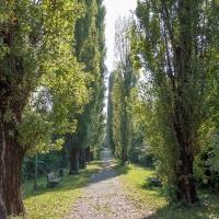 Viale del Mauriziano (4) - Alessandro Azzolini - Reggio nell'Emilia (RE)