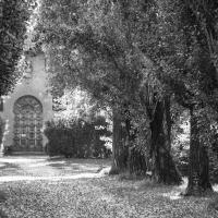 Viale del Mauriziano (3) - Alessandro Azzolini - Reggio nell'Emilia (RE)
