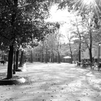 Piazza Fontanesi- Reggio Emilia 4 - Greta Bonacini - Reggio nell'Emilia (RE)