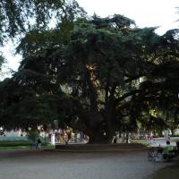 Giardini Pubblici 04 - Vascodegama1972 - Reggio nell'Emilia (RE)