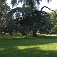 Giardinipubblici vascodegama1972 - Vascodegama1972 - Reggio nell'Emilia (RE)
