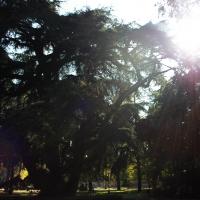 Parco del Popolo (3) - Giulia Bonacini Ph - Reggio nell'Emilia (RE)