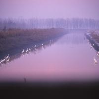 Tramonto sul canale Bondeno con sosta di Garzette Bianche - Claudio Magnani - Reggiolo (RE)