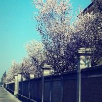 Sboccia la primaveraai cancelli dell'ex Locatelli - Ceci.melani - Reggio nell'Emilia (RE)