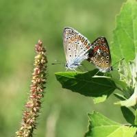 Le valli e i suoi insetti - Lasagni stefano - Reggiolo (RE)