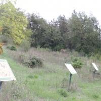 Panoramica del sentiero - Deps7 - Verucchio (RN)
