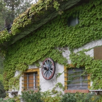 La facciata erbosa - Deps7 - Verucchio (RN)