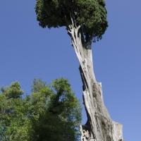 PARCO DEL CIPRESSO - FabioFromItaly - Montefiore Conca (RN)