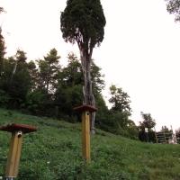 Il cipresso ed il suo parco - LaraLally19 - Montefiore Conca (RN)