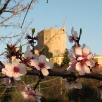 La Rocca e la dolcezza della primavera - LaraLally19 - Montefiore Conca (RN)