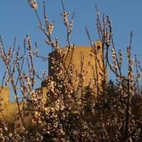 Il castello ed i fiori - LaraLally19 - Montefiore Conca (RN)