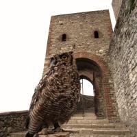 Ingresso alla Rocca con meravigliose creature - Larabraga19 - Montefiore Conca (RN)