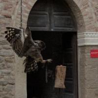 Eleganza nel cortile della Rocca - Larabraga19 - Montefiore Conca (RN)