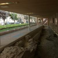 Domus del Chirurgo - Rimini 2 - Diego Baglieri - Rimini (RN)