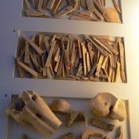 Resti ossei domus chirurgo - Paperoastro - Rimini (RN)
