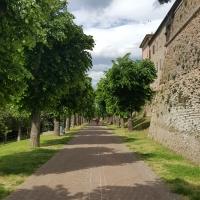 Viale dei tigli - Marco Musmeci - Saludecio (RN)