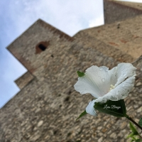 La Rocca , le sue sfumature...13 - Larabraga19 - Montefiore Conca (RN)